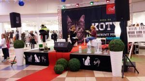 moda na koty (5)